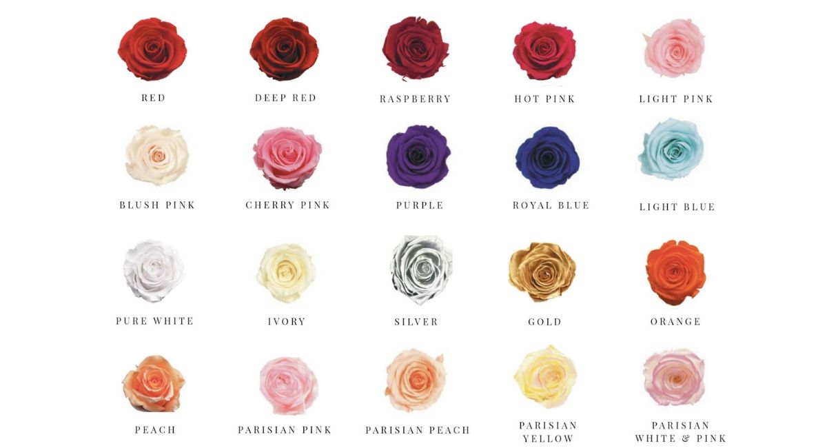 The Roses Empire Rose Colours