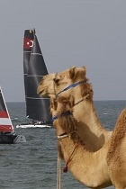 camel and yacht thumbnail